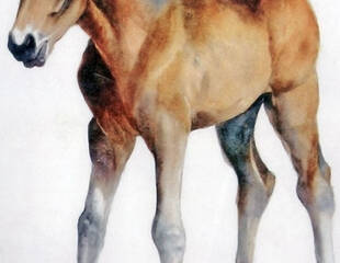Scamp-as-a-Foal_Watercolor-Painting_Thunderball-Ranch-Horses