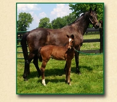 Mon Amour and 2013 Filly D'Espirit Amour