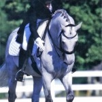 Coco Cavalli Thunderball Ranch Stallion Horse